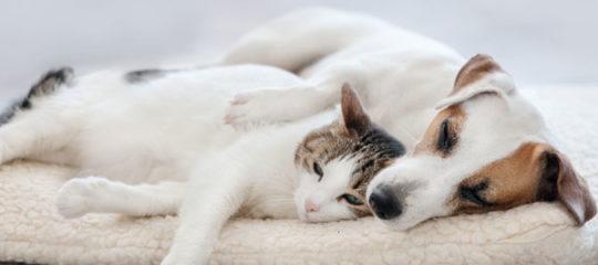Le couchage chien