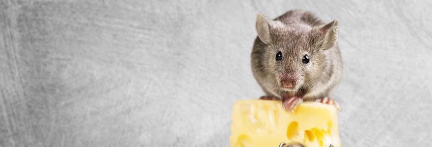 Piège a rat